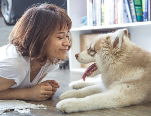Woof. Dog Owners Live Longer, Study Shows